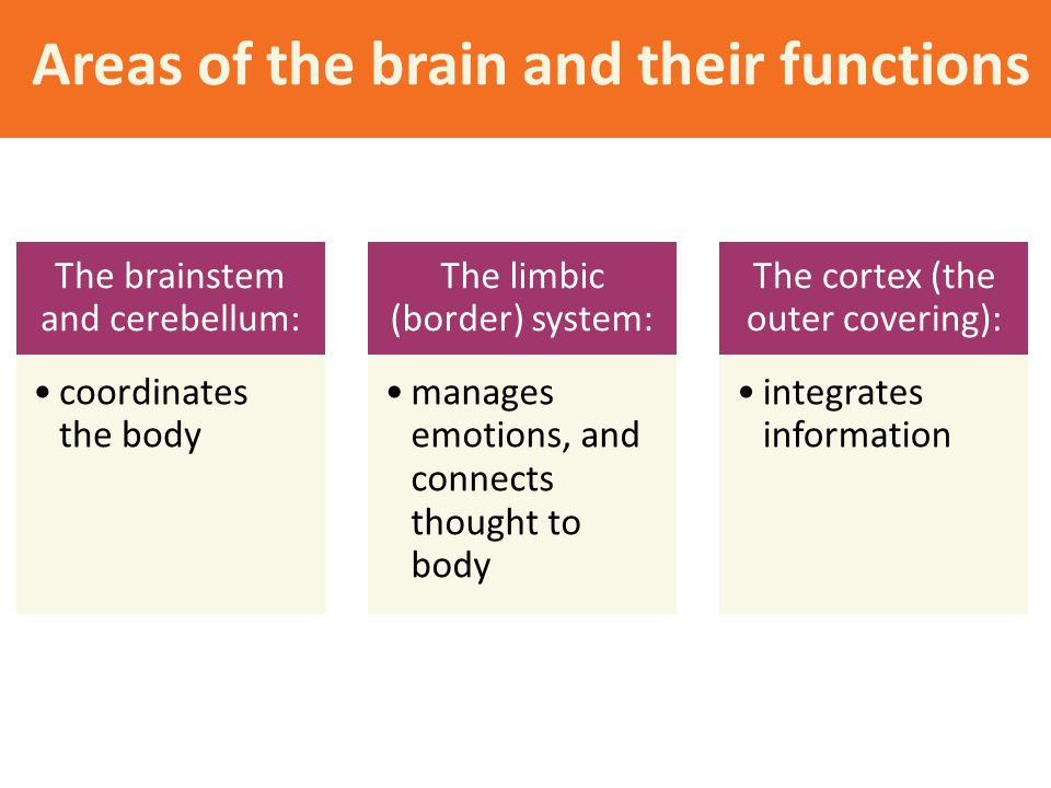 Areas of the brain and their functions