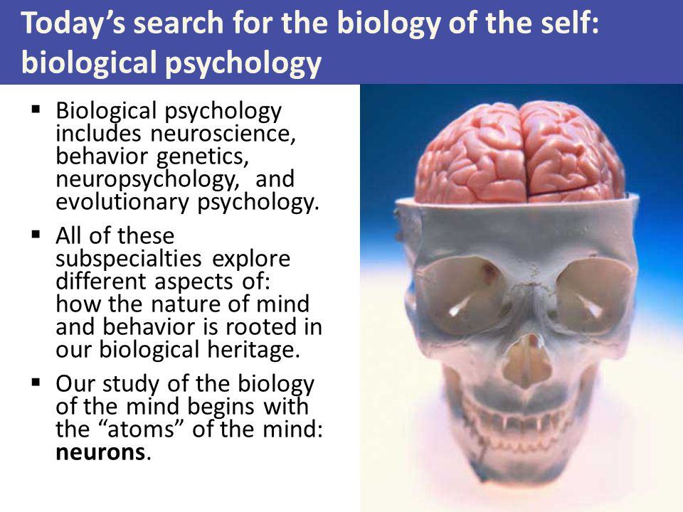 what is biological psychology As the name suggests biological psychology combines biology and psychology once upon a time, psychology consisted of describing phenomena without knowing how to explain them.