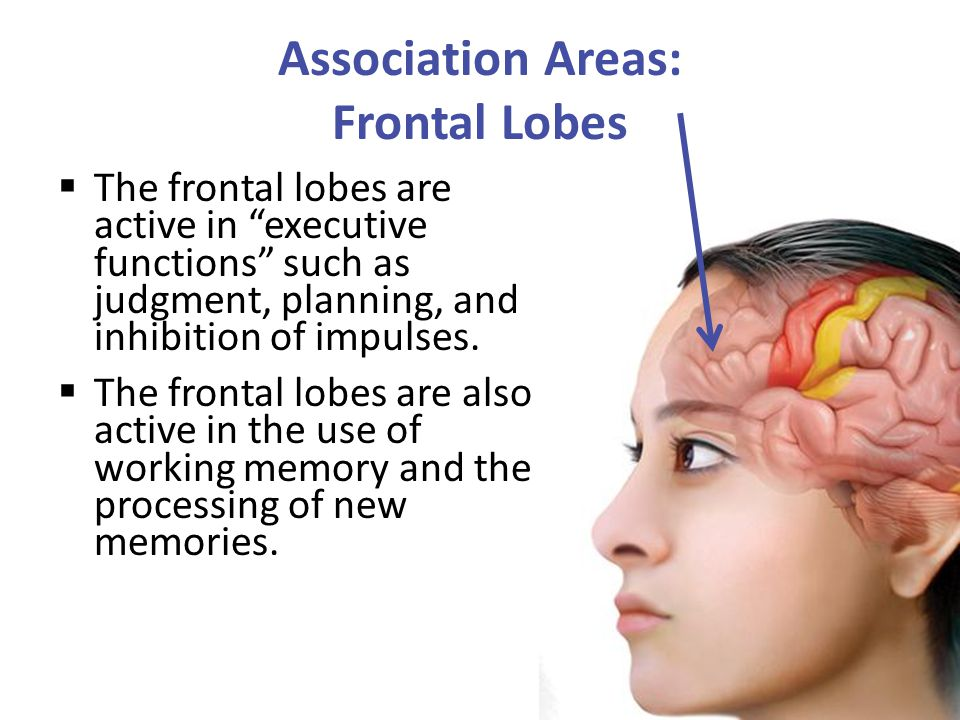 Association Areas: Frontal Lobes