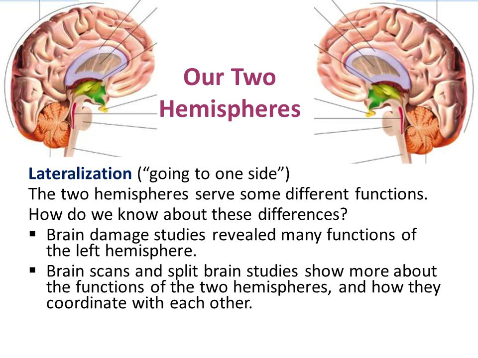 Our Two Hemispheres Lateralization ( going to one side )
