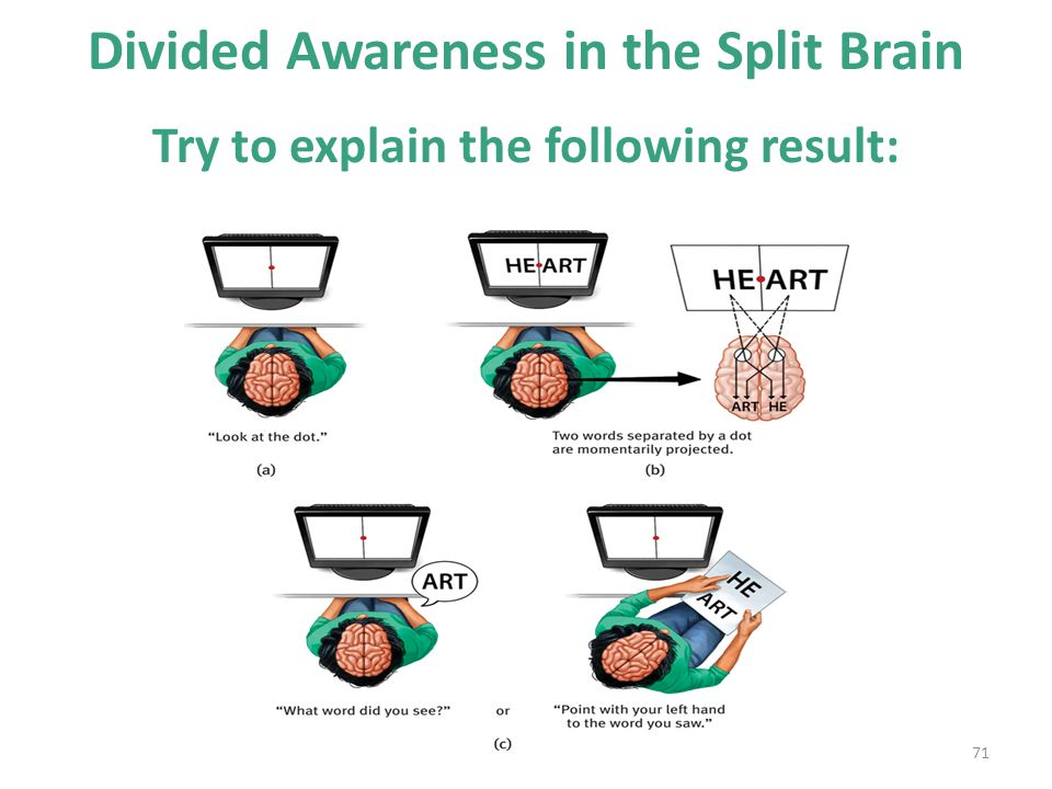 Divided Awareness in the Split Brain Try to explain the following result: