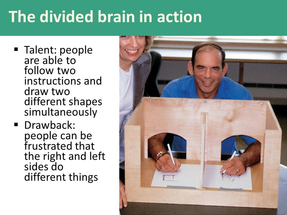 The divided brain in action