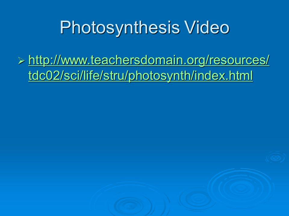 Photosynthesis Video http://www.teachersdomain.org/resources/tdc02/sci/life/stru/photosynth/index.html.