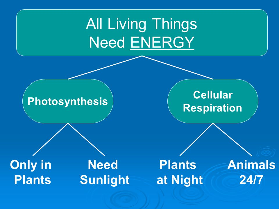 All Living Things Need ENERGY Only in Plants Need Sunlight Plants