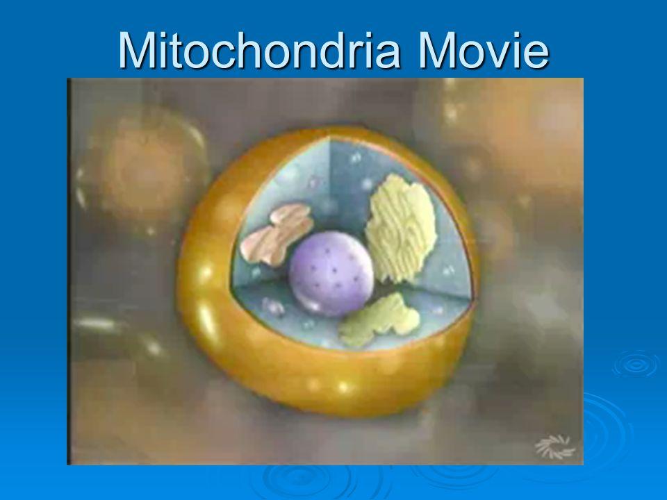 Mitochondria Movie