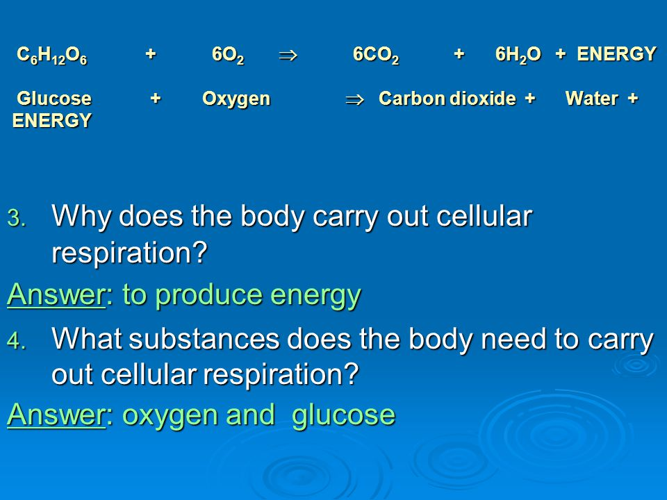 Why does the body carry out cellular respiration