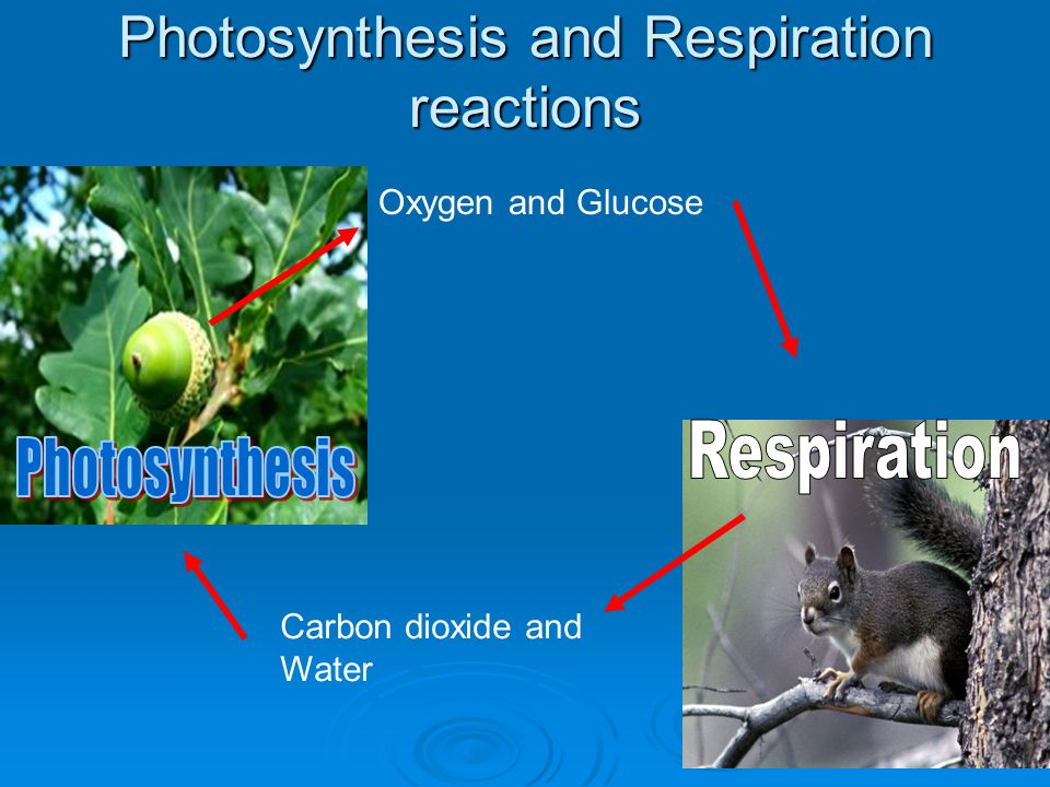 Photosynthesis and Respiration reactions
