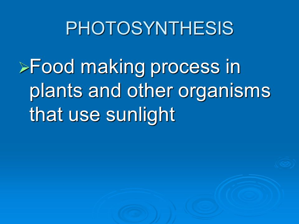 Food making process in plants and other organisms that use sunlight