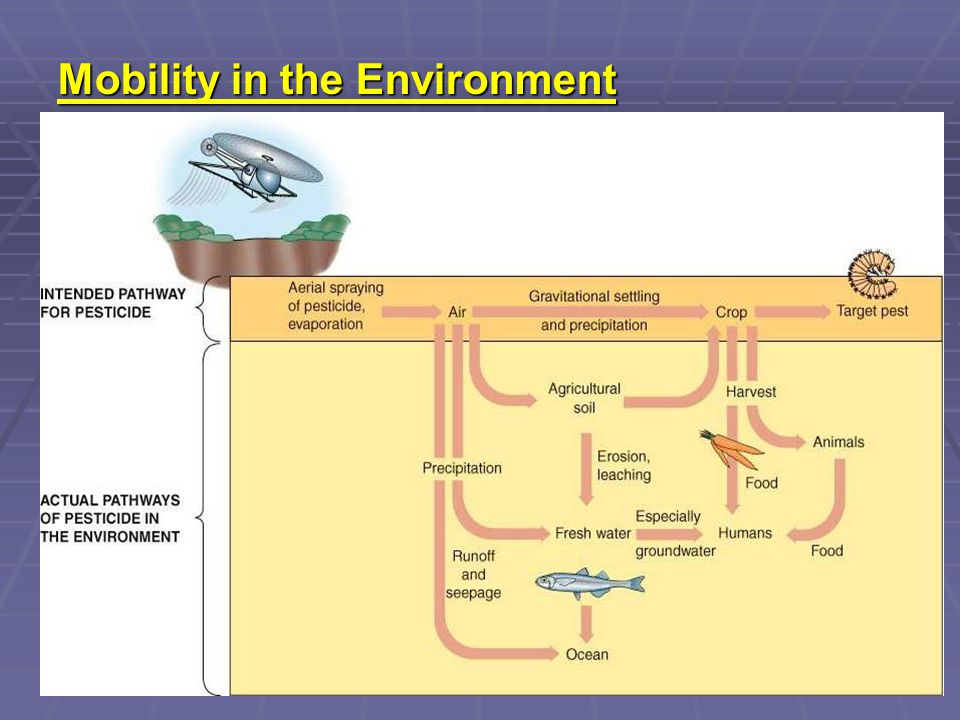 Mobility in the Environment