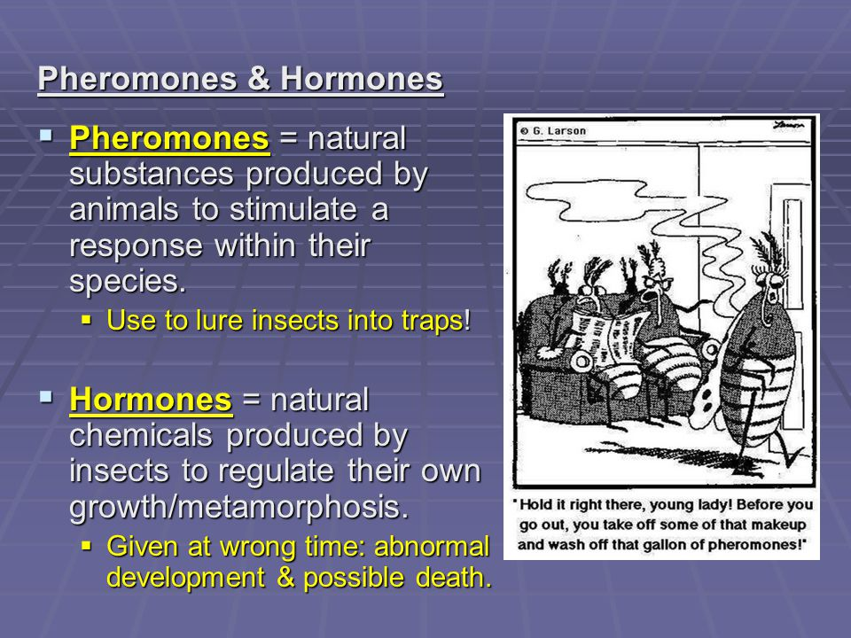 Pheromones & Hormones Pheromones = natural substances produced by animals to stimulate a response within their species.
