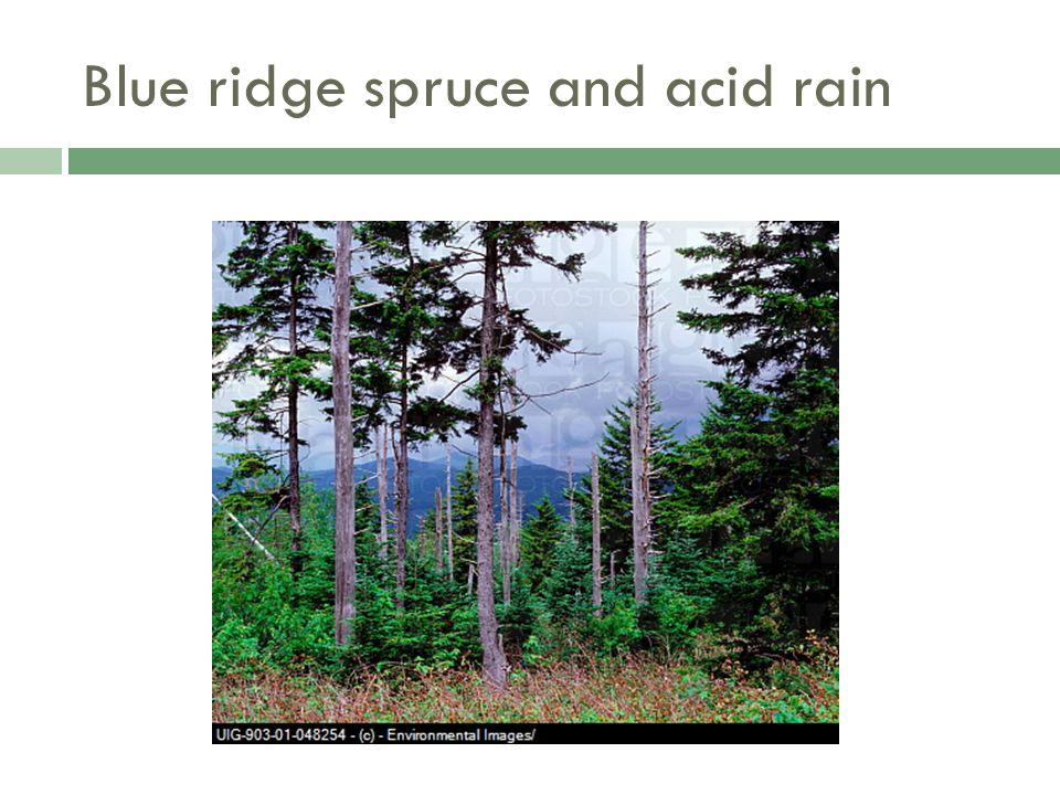 Blue ridge spruce and acid rain