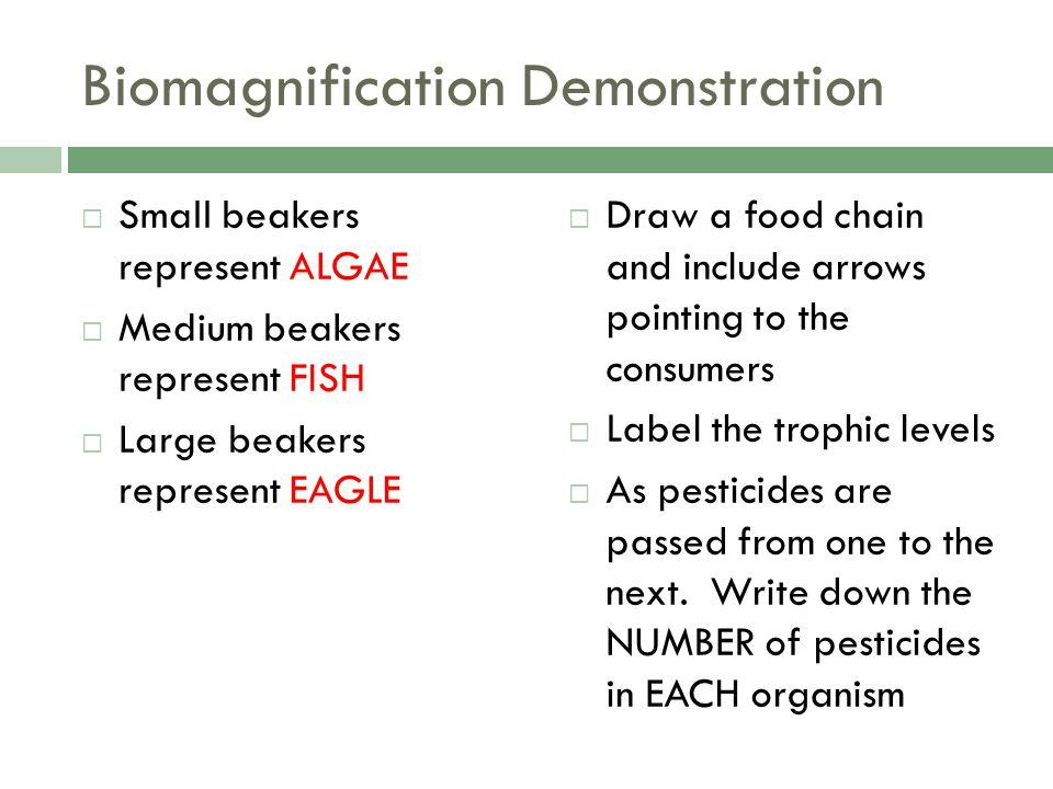 Biomagnification Demonstration