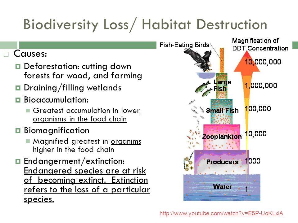 Biodiversity Loss/ Habitat Destruction