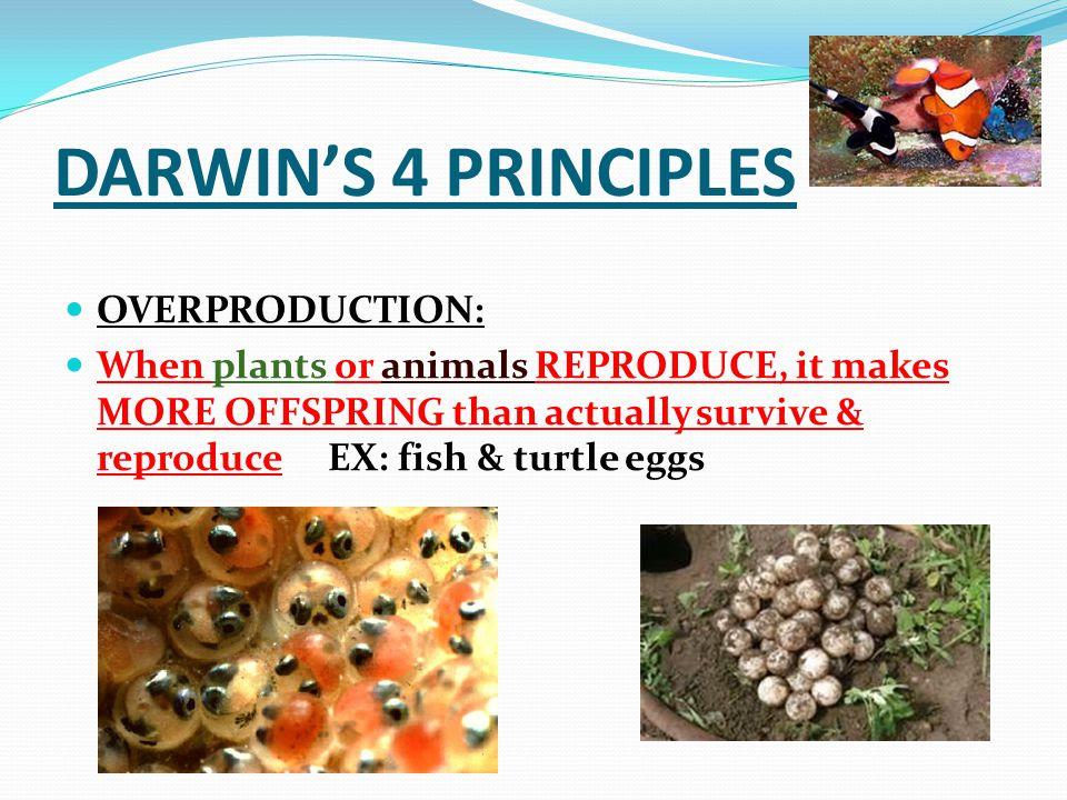 DARWIN'S 4 PRINCIPLES OVERPRODUCTION: