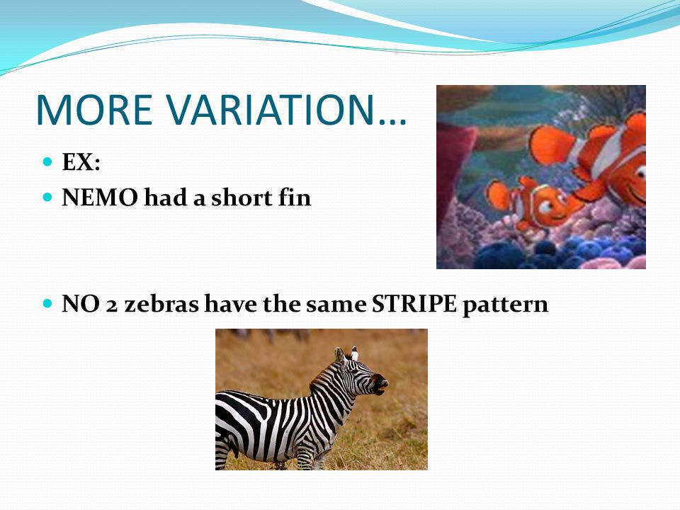 MORE VARIATION… EX: NEMO had a short fin