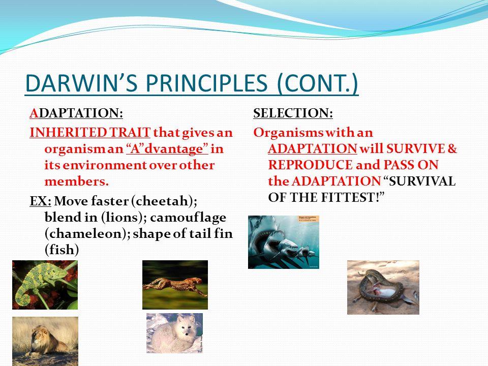 DARWIN'S PRINCIPLES (CONT.)