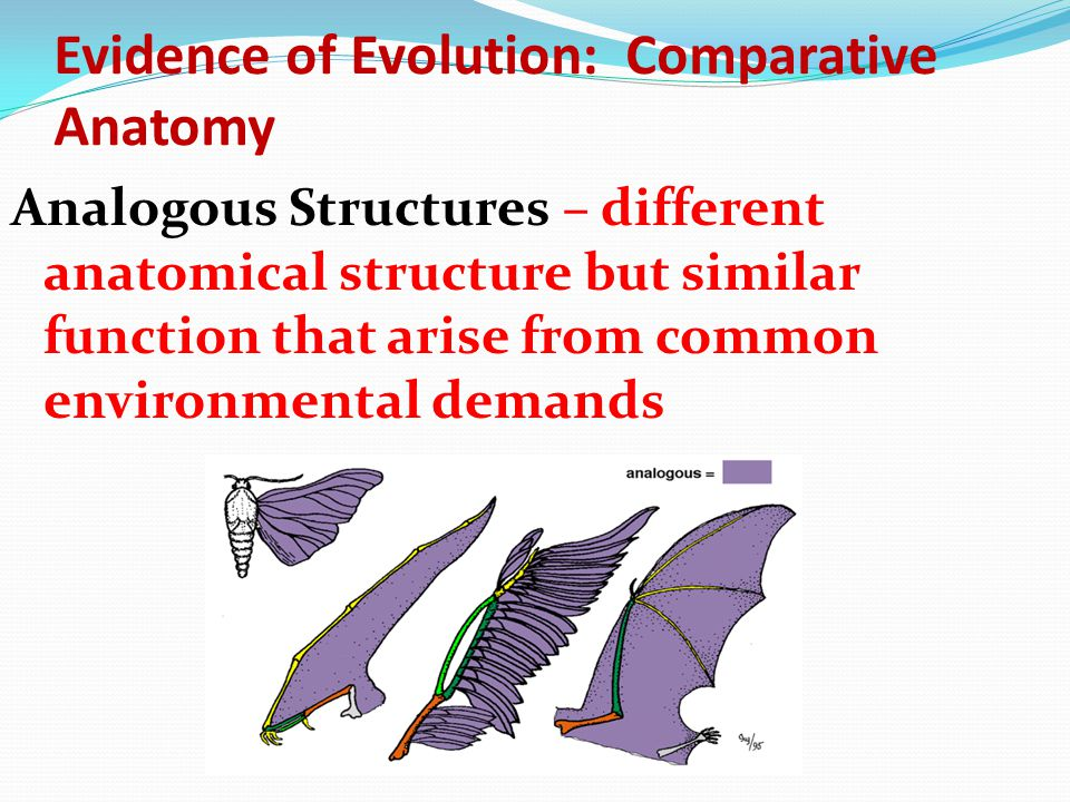 Evidence of Evolution: Comparative Anatomy