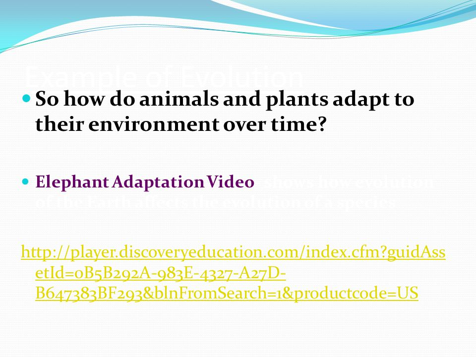 Example of Evolution So how do animals and plants adapt to their environment over time