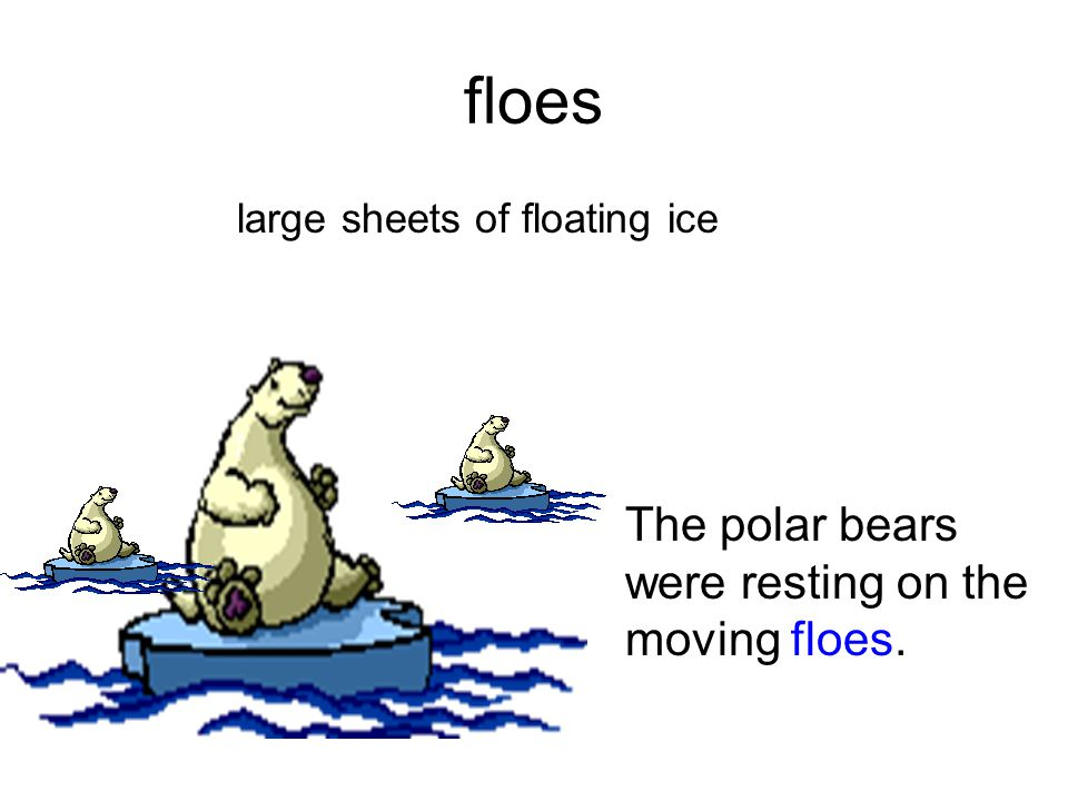 floes The polar bears were resting on the moving floes.