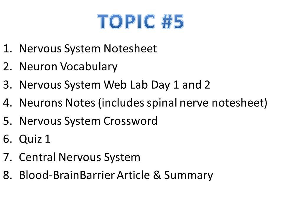 TOPIC #5 Nervous System Notesheet Neuron Vocabulary