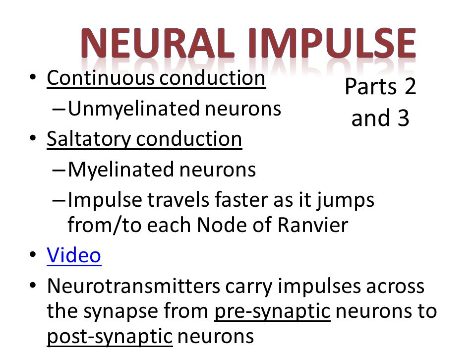 NEURAL IMPULSE Parts 2 and 3 Continuous conduction
