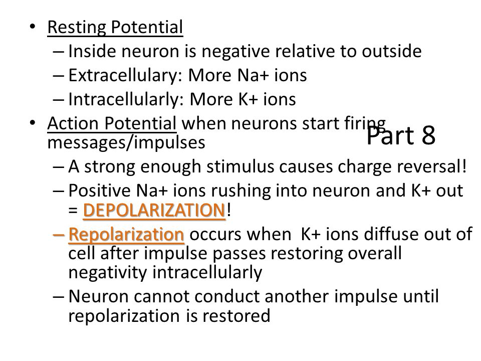 Part 8 Resting Potential Inside neuron is negative relative to outside