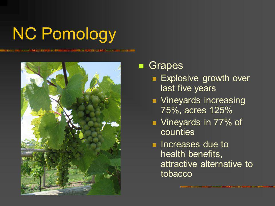 NC Pomology Grapes Explosive growth over last five years