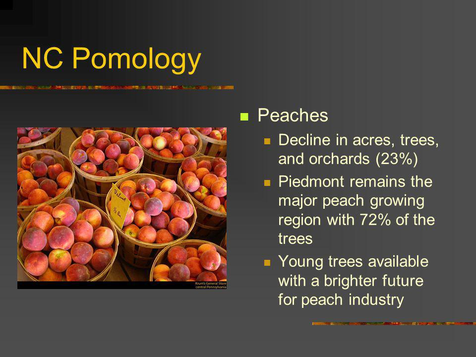 NC Pomology Peaches Decline in acres, trees, and orchards (23%)