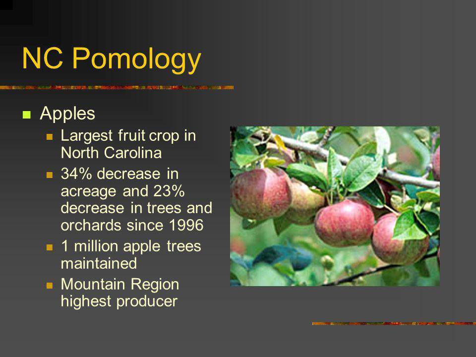 NC Pomology Apples Largest fruit crop in North Carolina