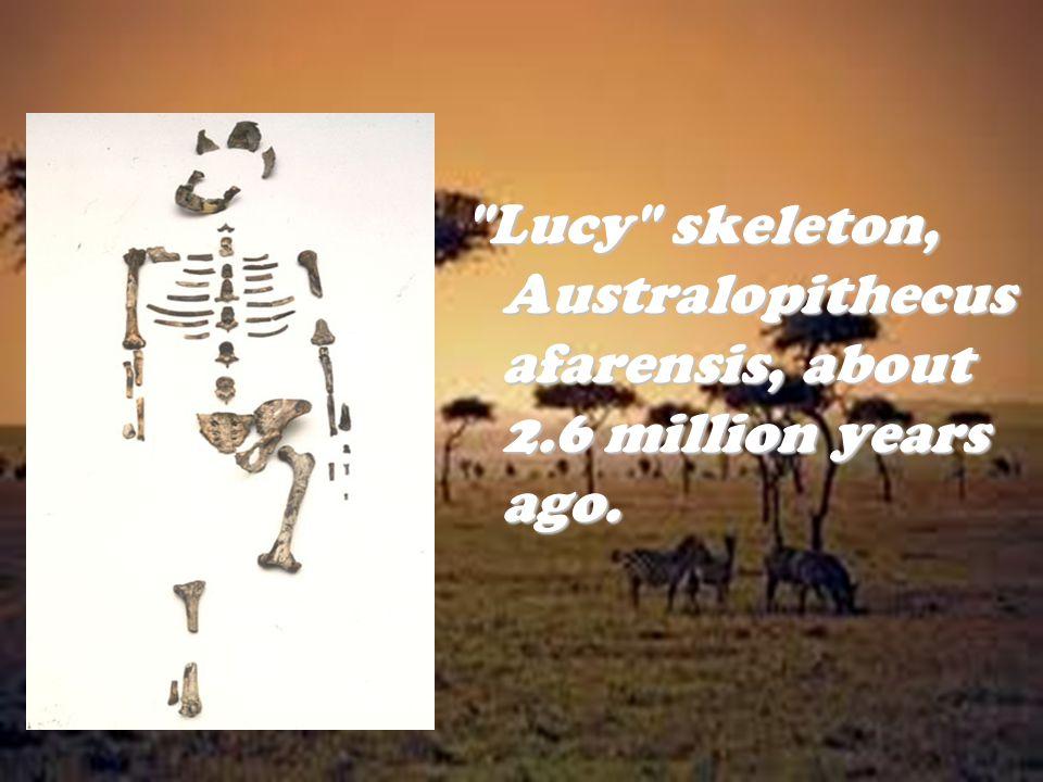 Lucy skeleton, Australopithecus afarensis, about 2
