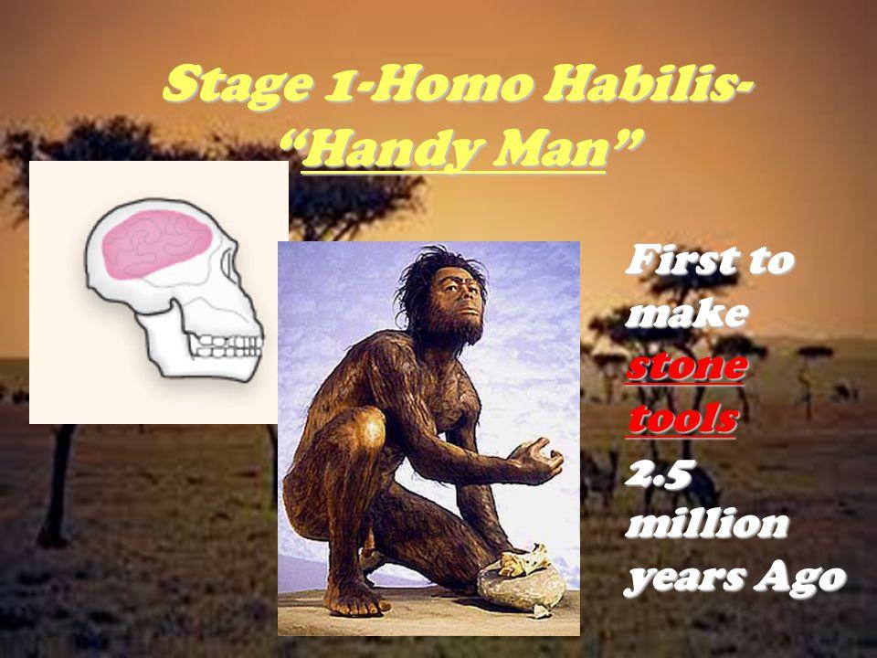 Stage 1-Homo Habilis- Handy Man
