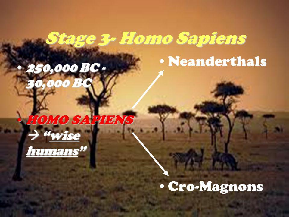 Stage 3- Homo Sapiens Neanderthals Cro-Magnons 250,000 BC - 30,000 BC