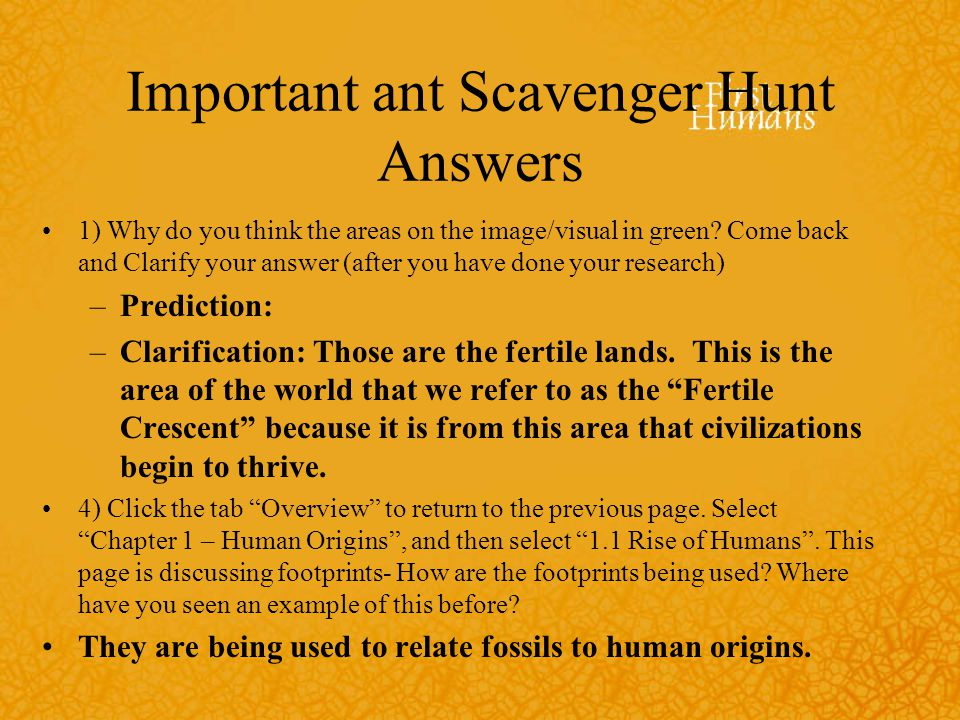 Important ant Scavenger Hunt Answers