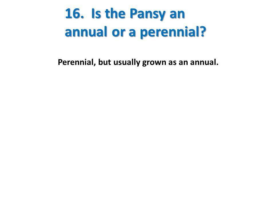 16. Is the Pansy an annual or a perennial