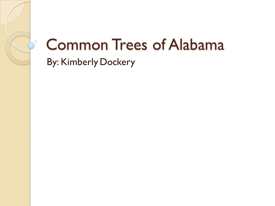 Common Trees of Alabama