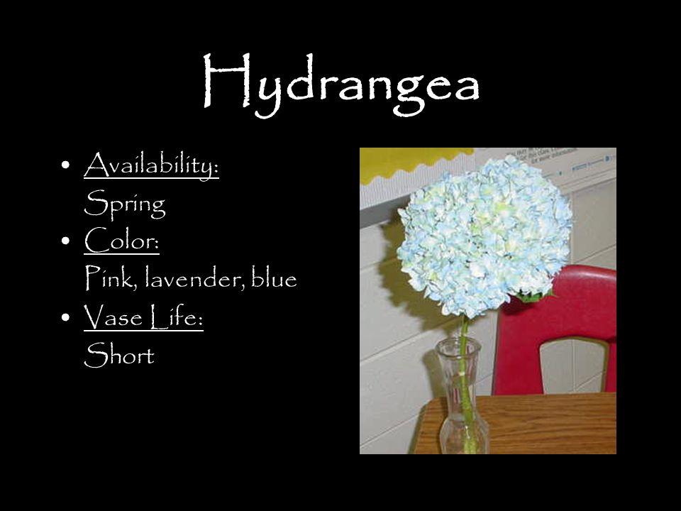 Hydrangea Availability: Spring Color: Pink, lavender, blue Vase Life: