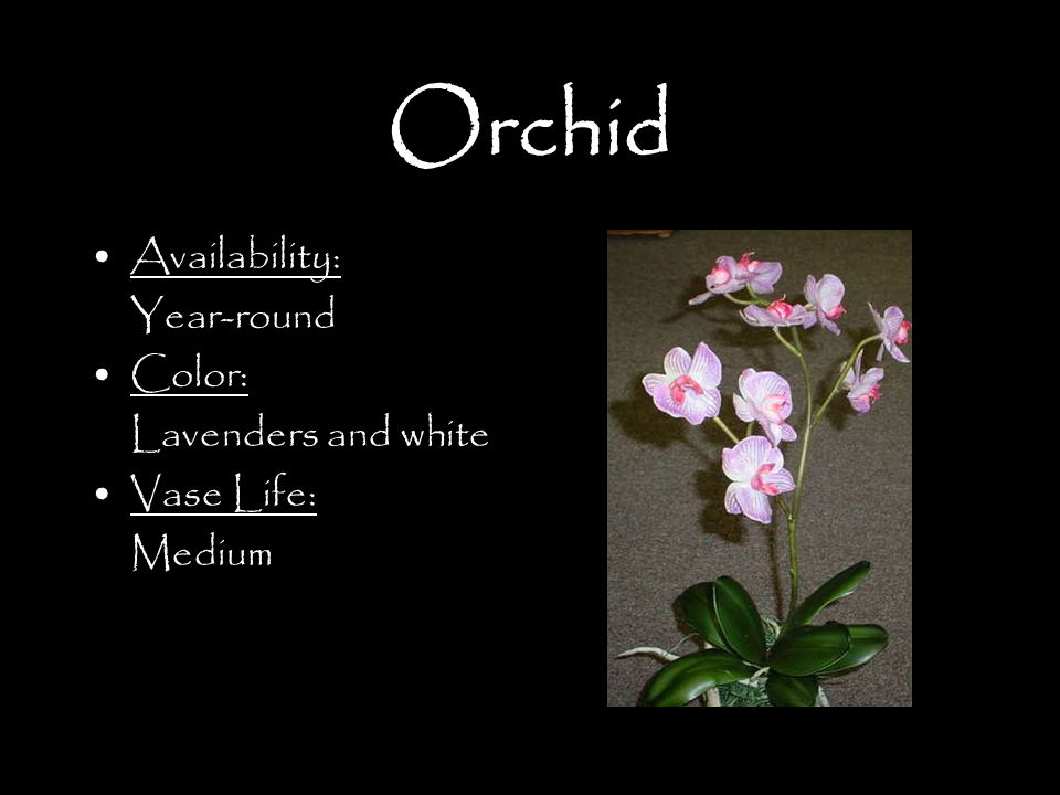 Orchid Availability: Year-round Color: Lavenders and white Vase Life: