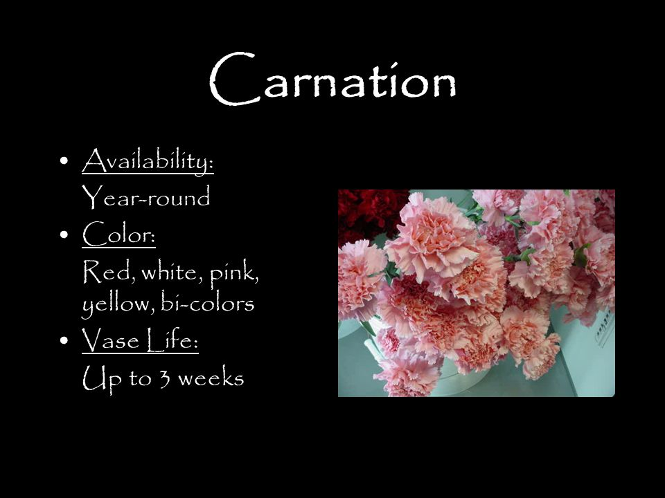 Carnation Availability: Year-round Color: