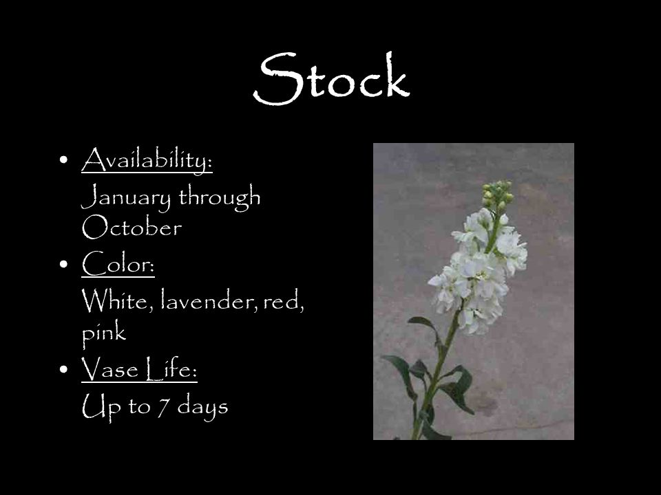 Stock Availability: January through October Color: