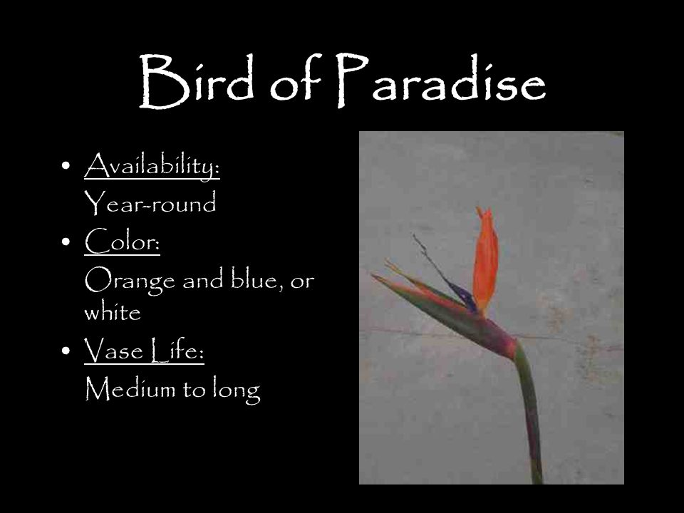 Bird of Paradise Availability: Year-round Color: