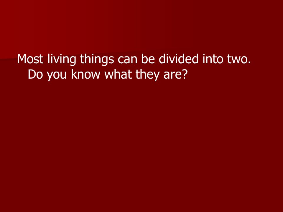 Most living things can be divided into two. Do you know what they are