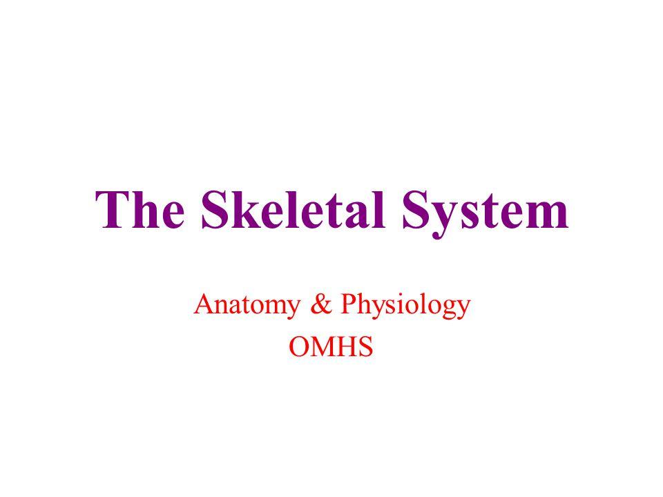 Anatomy & Physiology OMHS