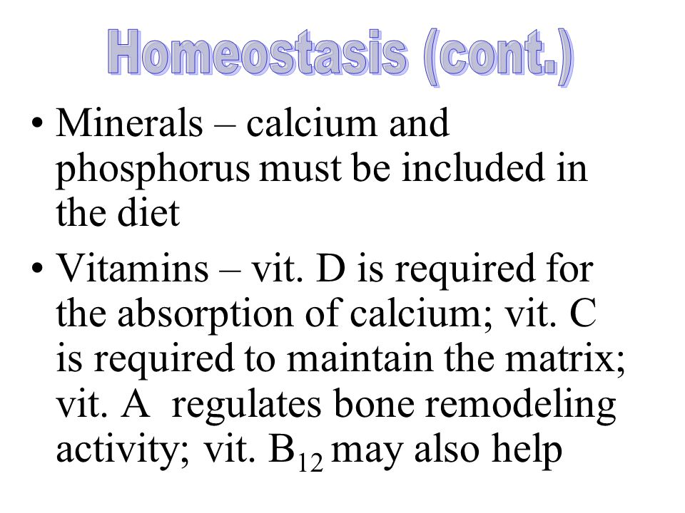Minerals – calcium and phosphorus must be included in the diet