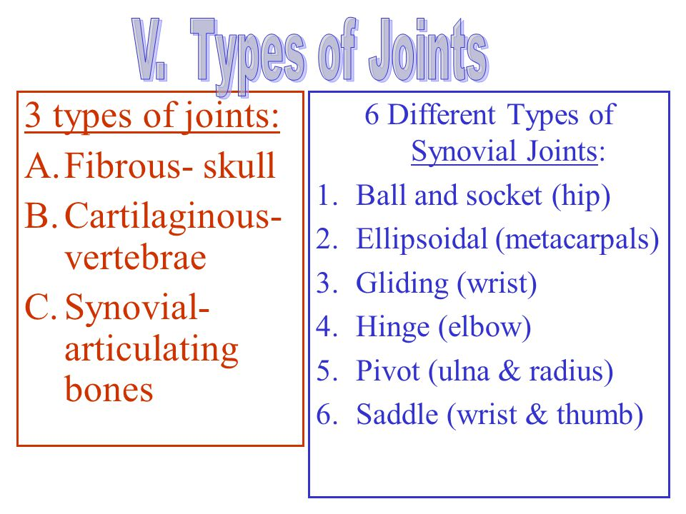 6 Different Types of Synovial Joints: