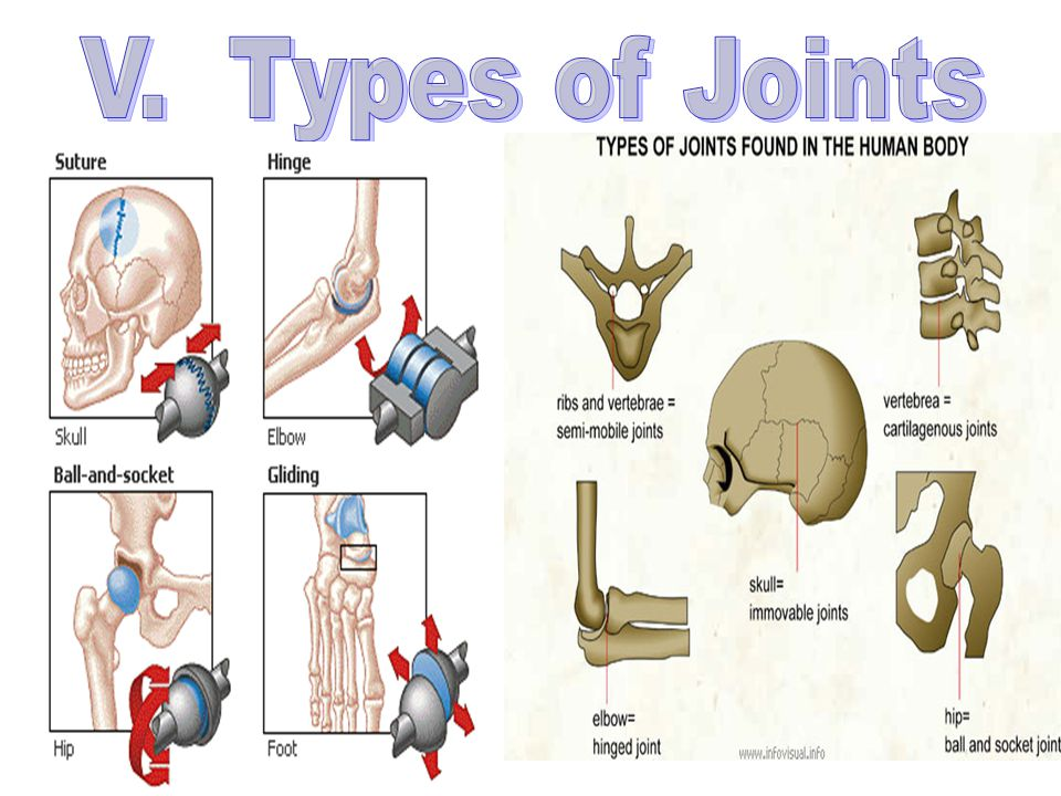 V. Types of Joints