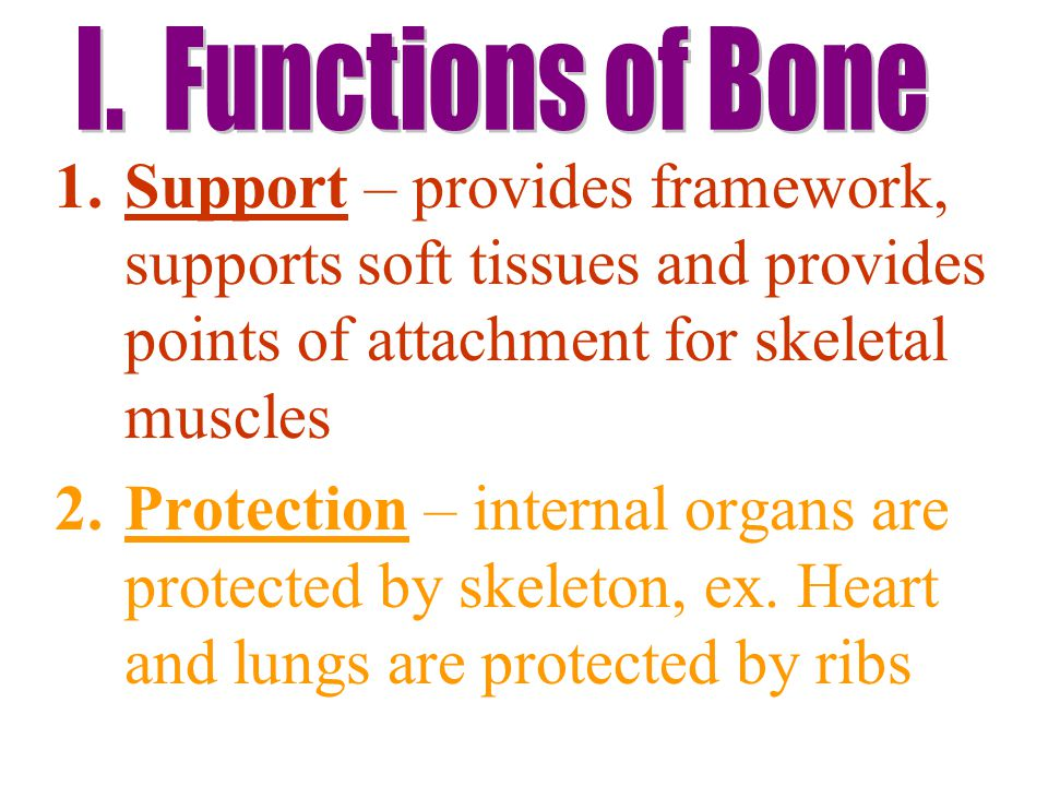 I. Functions of Bone Support – provides framework, supports soft tissues and provides points of attachment for skeletal muscles.