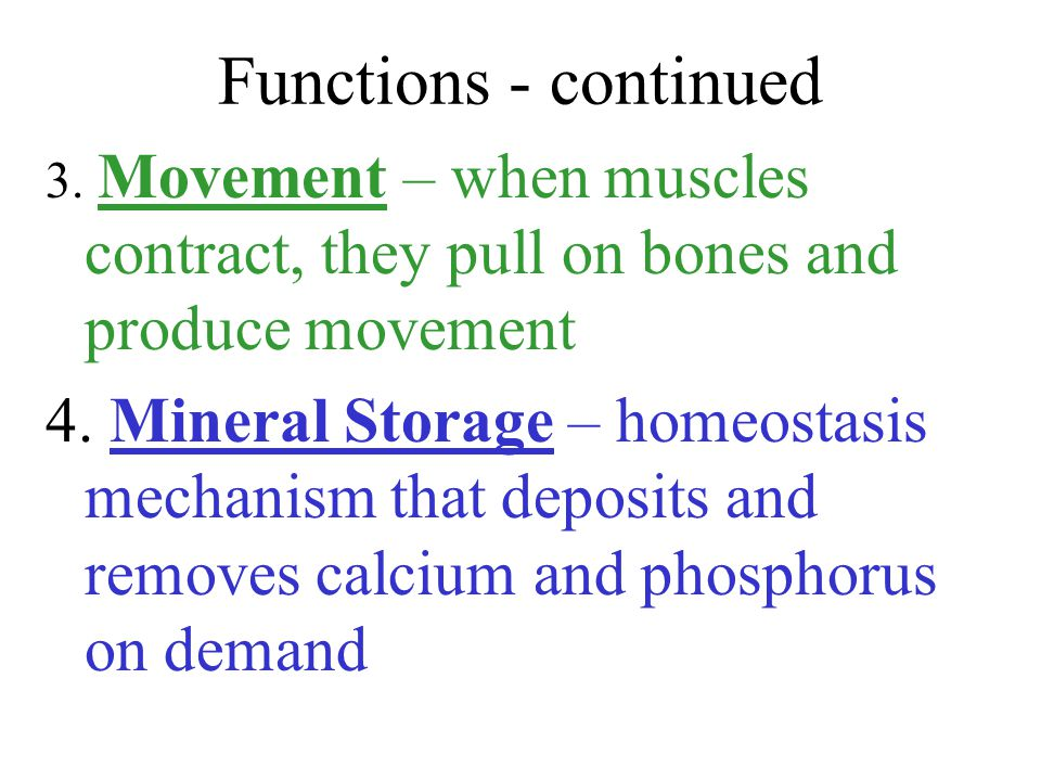 Functions - continued 3. Movement – when muscles contract, they pull on bones and produce movement.