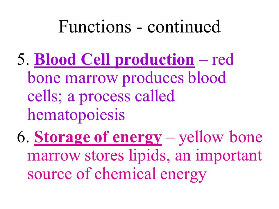 Functions - continued 5. Blood Cell production – red bone marrow produces blood cells; a process called hematopoiesis.
