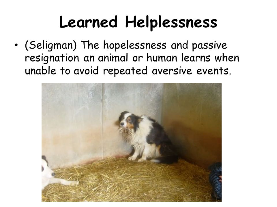 Learned Helplessness (Seligman) The hopelessness and passive resignation an animal or human learns when unable to avoid repeated aversive events.