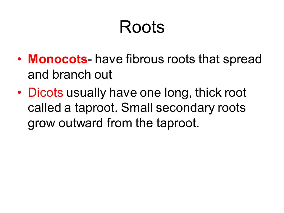 Roots Monocots- have fibrous roots that spread and branch out